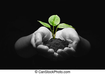 plant in hands - Hands holding sapling in soil