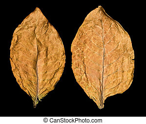 leaf tobacco - dry leaf tobacco closeup on the black...