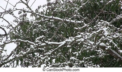 Falling snow with bushes in the background.