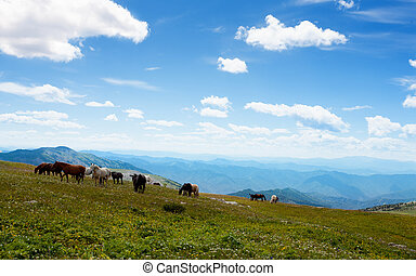 Mountain Altai. A beautiful landscape with horse and the blue sky.