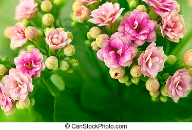 spring background with pink flowers