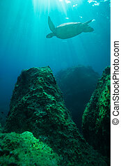 Turtle swimming among big rocks with beautiful light rays...