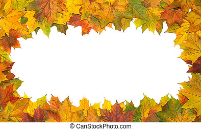 frame - Frame with colored autumn maple leaves - white...