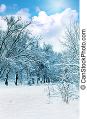 The snow-covered forest in sunny day.