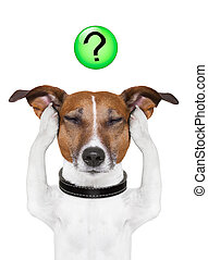 dog question mark - dog thinking with a question mark on top