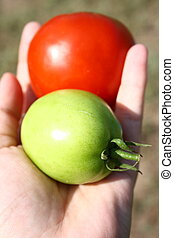 Differences - A hand holsing tomatoes that are the same yet...