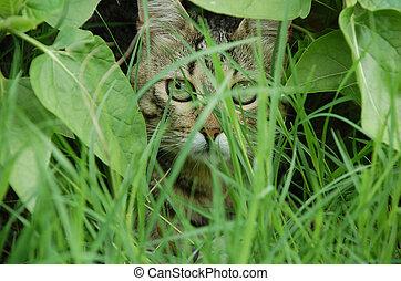 gato, escondendo, atrás de, folhas