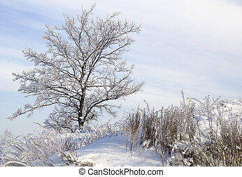 tree in snow against blue sky. Winter scene.