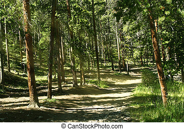 Dappled Forest Background - Dappled sunlight streams through...