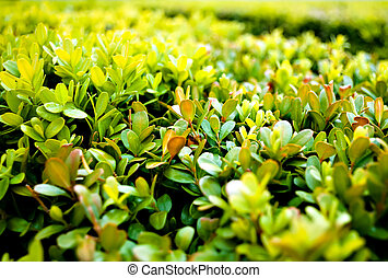 Green Bush - Leaves of a bush close-up in spanish garden.