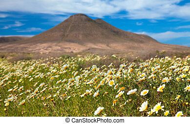 inland Fuerteventura - inland northern Fuerteventura,...