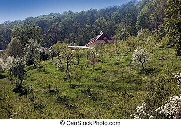 Prague - Petrin Orchards and Petrinske terasy
