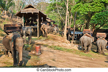 asia elephant camp in vilage of northern thailand