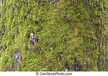 Moss on the stone Clip Art and Stock Illustrations. 22 Moss on the ...