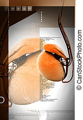 Testicles - Digital illustration of testicles in colour...