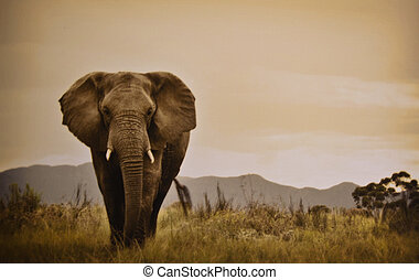 Elephant walking in a lovely scene