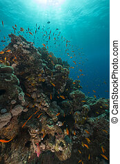 Fish and aquatic life in the Red Sea - Fish and aquatic life...