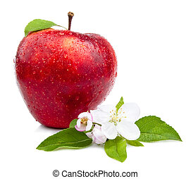 One Juicy Red Apple with flowers and water droplets on a...