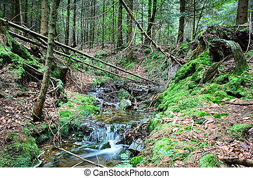 Forest stream at autumn day
