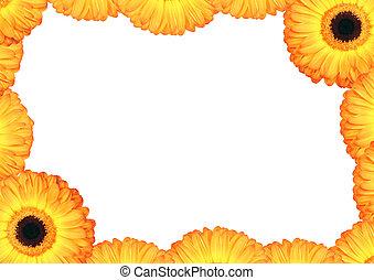 Daisy Petal Flower Border