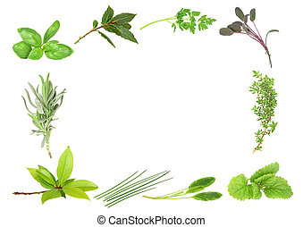 Herb Leaf Border - Herb leaf selection forming a border of...