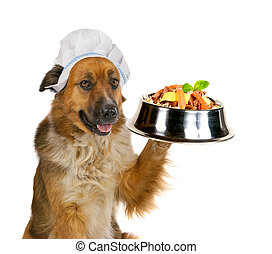 Dog serving up a gourmet meal - Cute big golden crossbred...