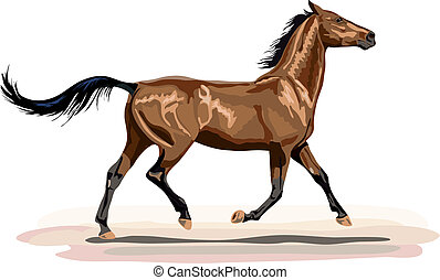 glossy brown horse in trot