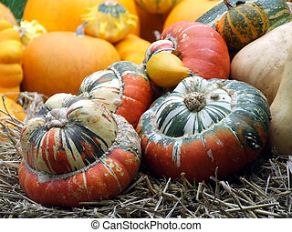 Gourds at Halloween