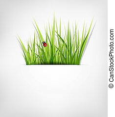 background with green grass
