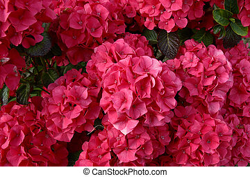 blooming wonderful 1