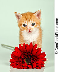 Small cat looking straight ahead with a red flower infront...