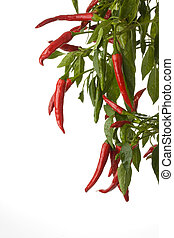 red hot chili peppers on a tree