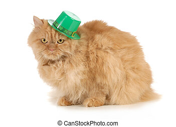 St Patricks Day cat looking at viewer isolated on white...