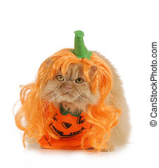 halloween cat dressed up like a pumpkin isolated on white...