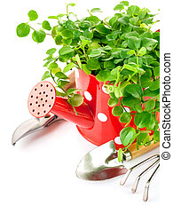 green plant in red watering can with garden tools