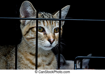 Curiosity - A curious kitten looking out from a cage