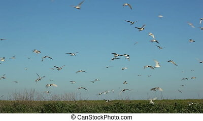 hundreds of birds flying in the blue sky 1