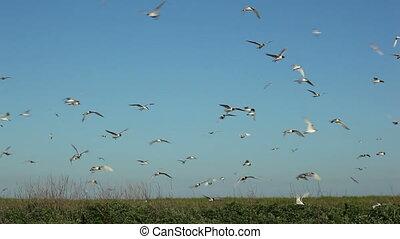 hundreds of birds flying in the blue sky 1 - hundreds of...