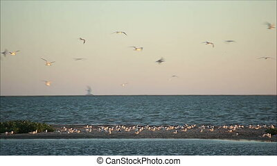 many birds up in the air against the evening sky