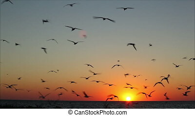 lot of birds flying against a beautiful sunset 1