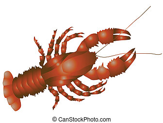 lobster isolated on the white background 10 EPS
