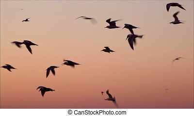 large number of gulls flying against the evening sky 5