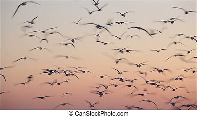 large number of gulls flying against the evening sky 9