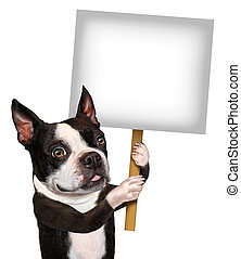 Dog Holding Sign - Dog holding a blank sign as a Boston...