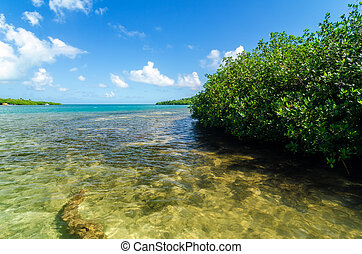 Caribbean Mangroves - Mangrove trees and a view of the...