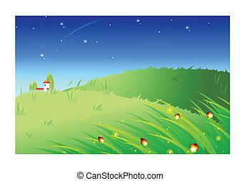 herbe, éclairé, fireflies