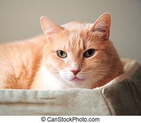 Kitten relaxing in his bed