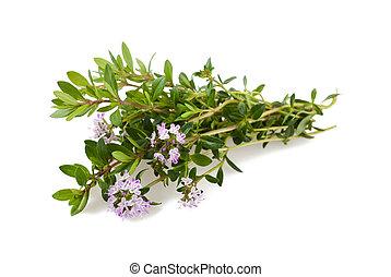 sarriette, fleurs