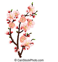 cherry blossom branch abstract background - abstract...