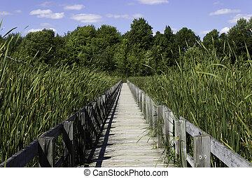 Boardwalk over the marsh